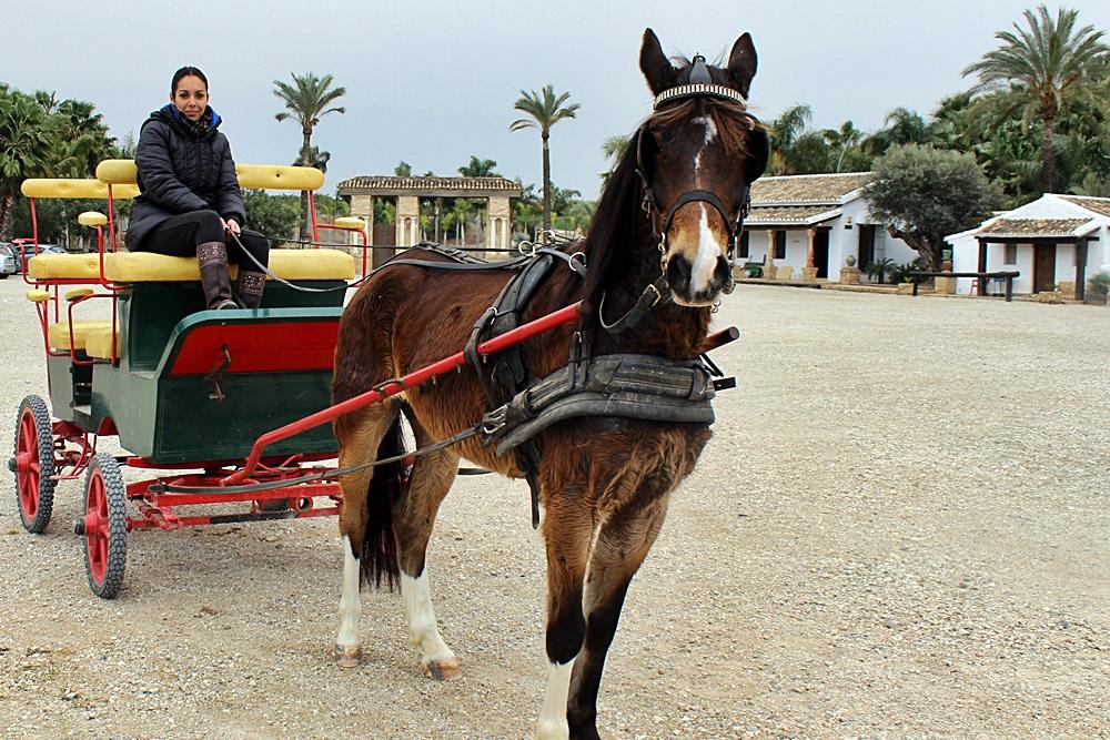 Granja_escuela_coche_de_caballos