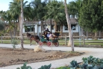 Paseo_coche_caballos_granja_escuela_2
