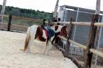 Pony_granja_escuela_1